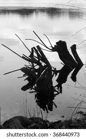 Photography in black and white of a trunk that looks between the water of the Lake.