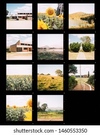 Photography contact sheet of a set of shots in countryside. Analog film photo style presentation for press agencies and artist with photos marked