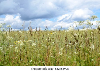 photography of field flowers, clouds