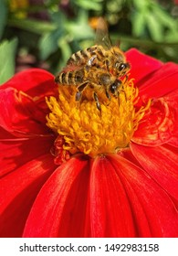 Photography of honey bee on red flower