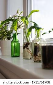 photography of indoor plants. Garden by the window.