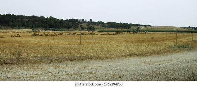 Photography of a landscape in yellow and ocre shades showcasing dry cropland