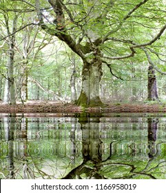 photography with reflection in the water of beech trees in the forest of Urbasa Natural Park, Navarra, Spain,peace, harmony, tranquility, serenity, meditation, transcendence, relaxation, balance,