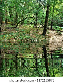 photography with reflection in the water of beech trees in the forest of Galicia, Spain,peace, harmony, tranquility, serenity, meditation, transcendence, relaxation, balance,