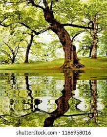 photography with reflection in the water of chestnut trees in the forest of Casaño, Asturias, Spain, peace, harmony, tranquility, serenity, meditation, transcendence, relaxation, balance,