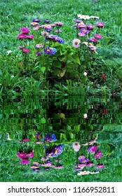 photography with reflection in the water of colorful flowers,peace, harmony, tranquility, serenity, meditation, transcendence, relaxation, balance,