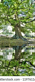 photography with reflection in the water  of a large chestnut forest, Nature park The castañar, The Tiemblo, Avila,peace, harmony, tranquility, serenity, meditation, transcendence, relaxation, balance