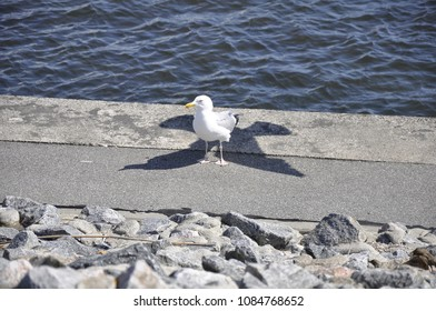 Photography of a seagull with a tricky shadow. This picture was a real funny coincidence.