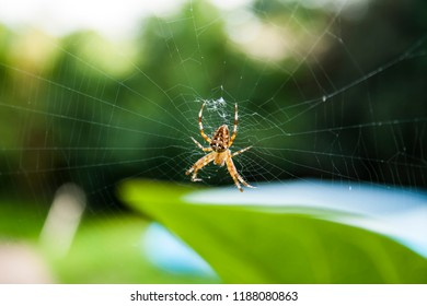 Photography of a spider i wild on spider's web.