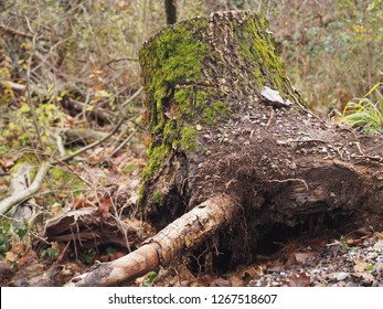 photography that is showing an uprooted tree
