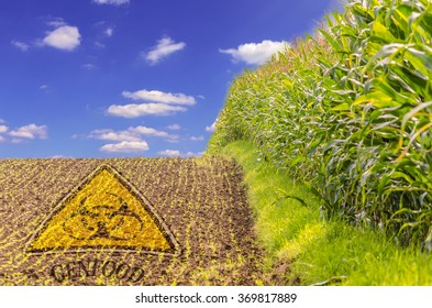 Photomontage;  Tag field with regard to gene and food corn.