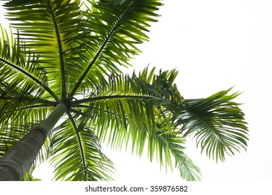 Photorealistic palm leaves isolated on white
