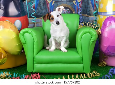 Photos of carnival with a jack russell on a green armchair.