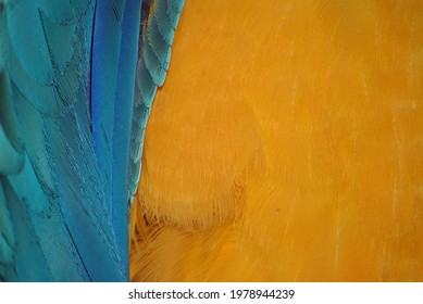 Photos of colorful macaw feathers