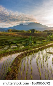 photos of Indonesian natural scenery with rice fields and blue mountains in the morning