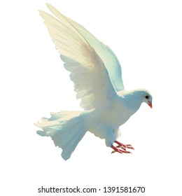 photos of landing pigeons, suitable for product promotion covers. white background