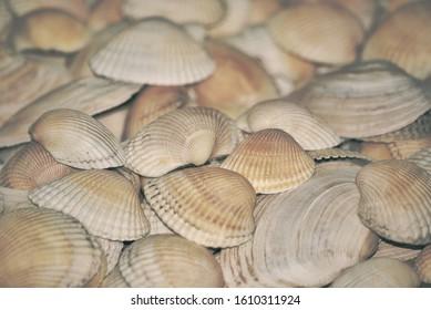 Photos of many large shells