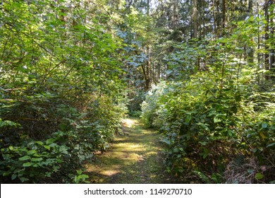 Photos of San Juan Island, Washington State in the Pacific Northwest. Lush green forests and vegetation beset by trails, woods, meadows and grasses.