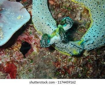 Photos taken while scuba  diving in Rabaul and Kokopo .