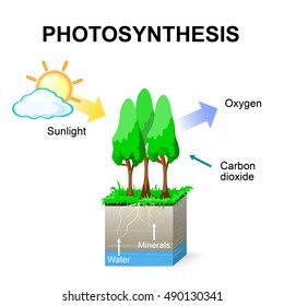 Photosynthesis diagram images stock photos vectors shutterstock photosynthesis schematic of photosynthesis in plants ccuart Image collections