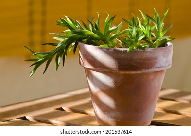 Phototropism. Houseplant growing towards sunlight on a terrace. Selective focus.
