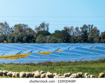 photovoltaic panels near a sheep pasture