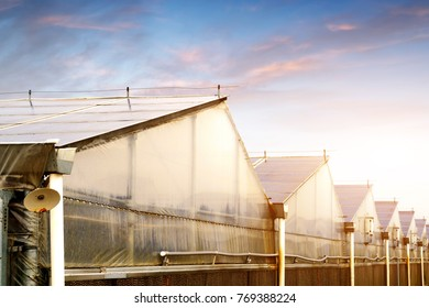Photovoltaic roof, vegetable production base of plastic shed.