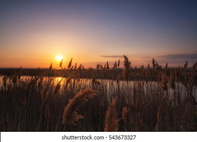 Phragmites at sunset at Union Beach, New Jersey