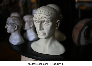 Phrenology Head Busts
