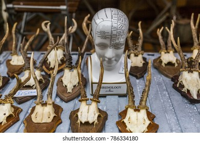 Phrenology head and mounted deer skulls for sale in a vintage shop in Stroud, Gloucestershire, UK