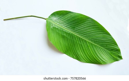 Phrynium leaf isolated on white background. Phrynium used to pack rice cake in Lunar new year