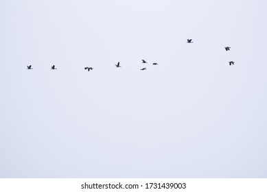 Phtograph of birds flying on the sky.