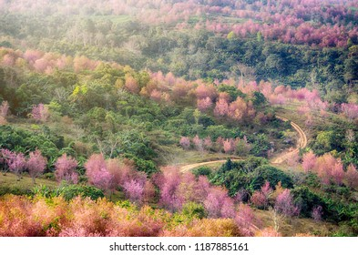 Phu Hin Rong Kla National Park is a national park located in the Loei, Phitsanulok and Phetchabun Provinces of Thailand.