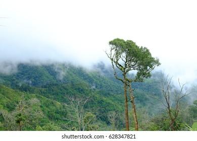 Phu Soi Dao National Park, Chat Trakan District, Phitsanulok, Thailand