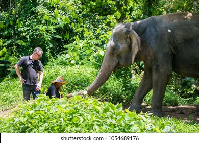 Phuket, Thailand: 12 March, 2017: Staff and tourists with elephants at the Phuket Elephant Sanctuary.