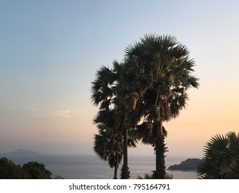 Phuket /Thailand - 12th of December 2017: two palm trees in sharp focus with the ocean in the background during the sunset hours that color the sky in beautiful pastel tones