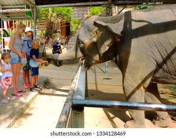 PHUKET, THAILAND - JANUARY 02, 2018: Tourist feeding banana to elephants.