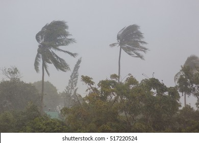 Phuket, Thailand. Strong storm wind sways the trees and breaks the leaves from the two palm trees. The street is heavy rain. The weather turned bad. Declared a storm warning