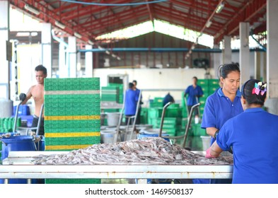 Phuket,Thailand - May 18,2019 :People are collecting for categorize many size of fish ,activities at the port which is a fish market in Phuket,Thailand.