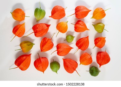Physalis gooseberry ground cherry or bladder cherry composition isolated on white