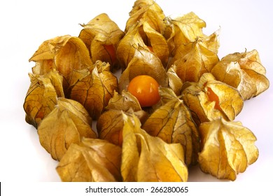 Physalis group, all closed but one, shot on a white background at an angle