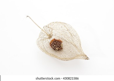 Physalis peruviana lantern isolated on white. inca berry