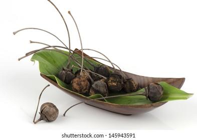 physic nut (Jatropha curcas L.), Euphorbiaceae.