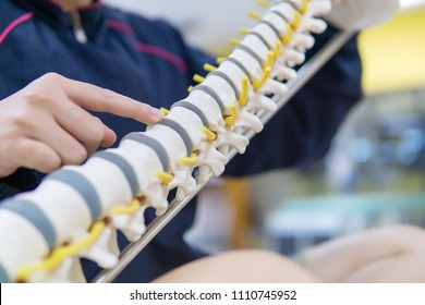 Physical therapist Supports the lateral spine model and finger focus to Thoracic section with the spine disc.