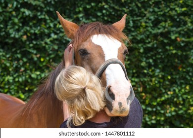 physical therapy for horse, Exercise and regeneration for horses, woman is working with horse for therapy,  equine, massage