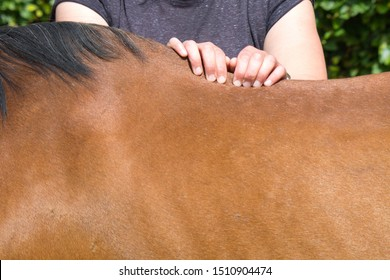 physical therapy for horse, Exercise and regeneration for horses, woman is working with horse for therapy, massage equin