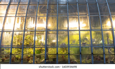 Phyto lamps for plant growth in the winter season in the greenhouse / hothouse. Artificial lighting of plants in short daylight conditions