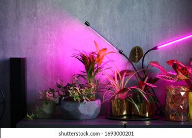 phytolamps illuminate potted plants on a shelf in a room