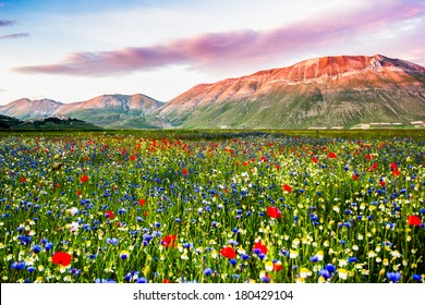 Piana Grande, landscape in bloom, flowering in Castelluccio