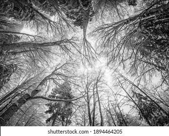 Piatra Creaiului Mountains in winter, Rucar-Bran area